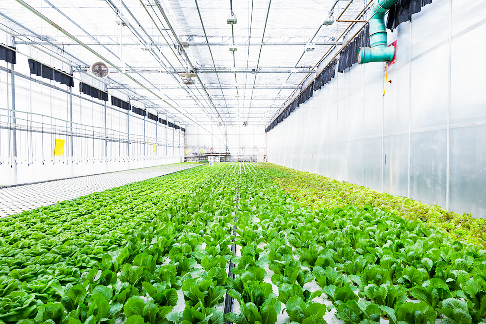 Climate Control Systems greenhouse